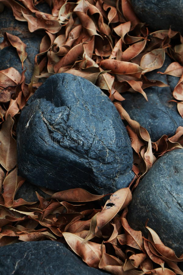 Beschaffenheit des Felsens und des trockenen Blattes lizenzfreies stockbild