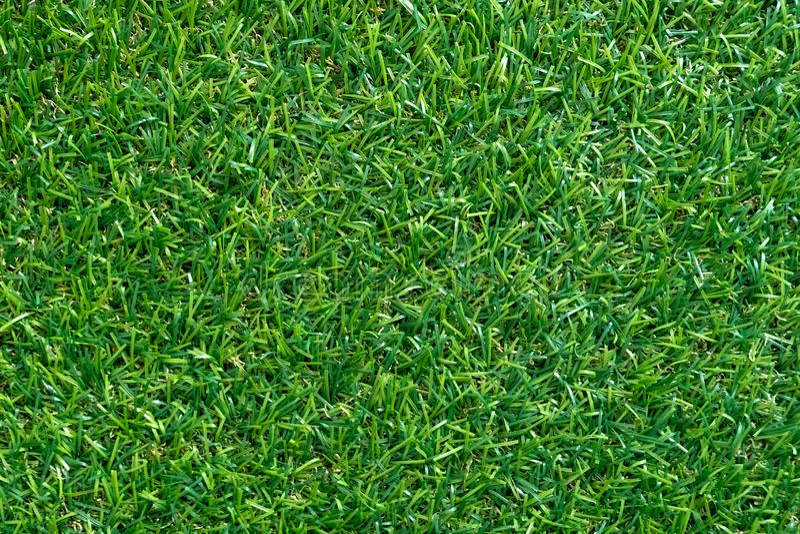 Beschaffenheit des grünen Grases für Hintergrund Grünes Rasen Muster und textu stockbilder