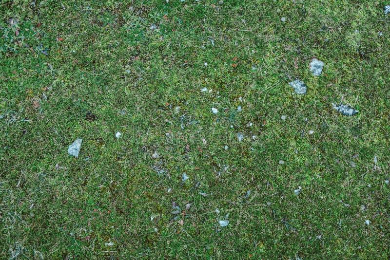 Beschaffenheit des grünen Grases mit kleinen Felsen lizenzfreie stockfotografie