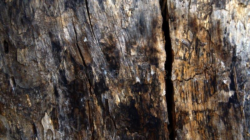 Beschaffenheit des Holzes lizenzfreies stockfoto