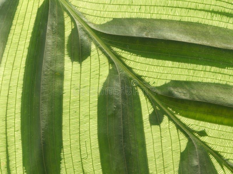 Beschaffenheit des kleinen Blattes stockfotografie