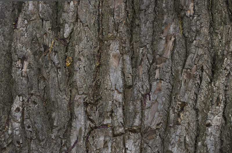 Beschaffenheit einer Baum ` s Barke lizenzfreie stockbilder