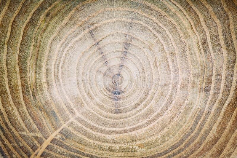 Beschaffenheit eines alten Baums, runder Sägeschnitt, hölzerner Hintergrund lizenzfreie stockfotos