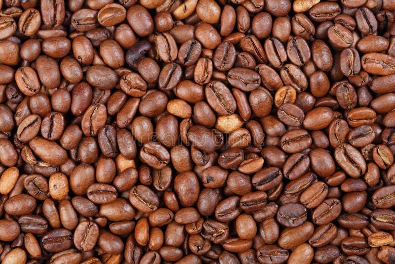 Beschaffenheit feinschmeckerischen Kaffees Äthiopiens Mocca Foto der hohen Auflösung des Kaffees lizenzfreie stockfotos