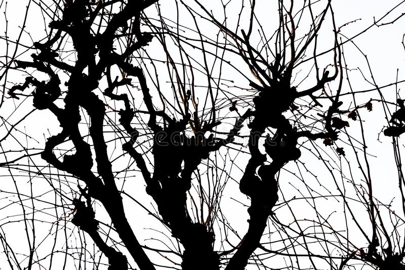 Beschaffenheit Isolant auf weißem Hintergrund Schwarzes weißes Schattenbild graphiken Baumzweige mit Blättern mit bewölktem vektor abbildung