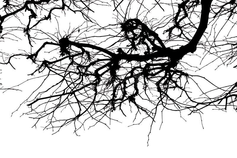 Beschaffenheit Isolant auf weißem Hintergrund Schwarzes weißes Schattenbild graphiken Baumzweige mit Blättern mit bewölktem lizenzfreie abbildung
