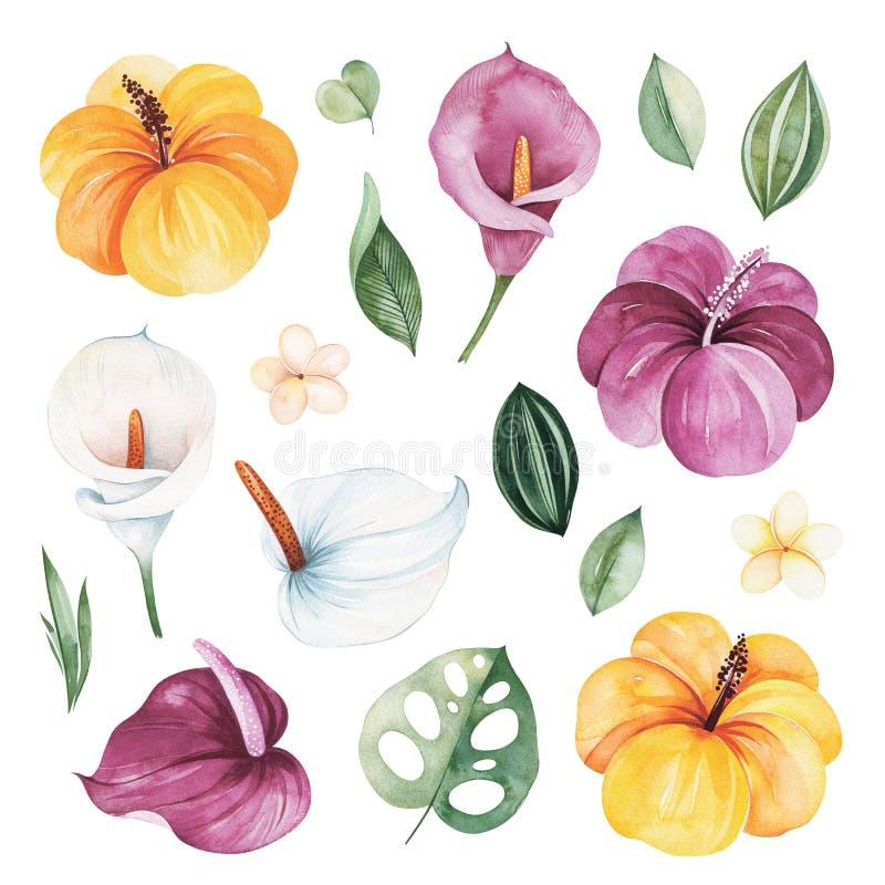 Beschaffenheit mit grünen Blättern, Hibiscusblumen, Callalilie, Frangipani und mehr lizenzfreie abbildung