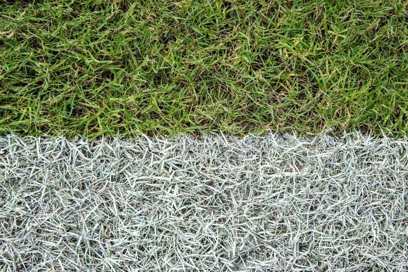Beschaffenheit und weiße Linie Streifen des grünen Grases im Fußball- oder Fußballplatzstadion stockbilder