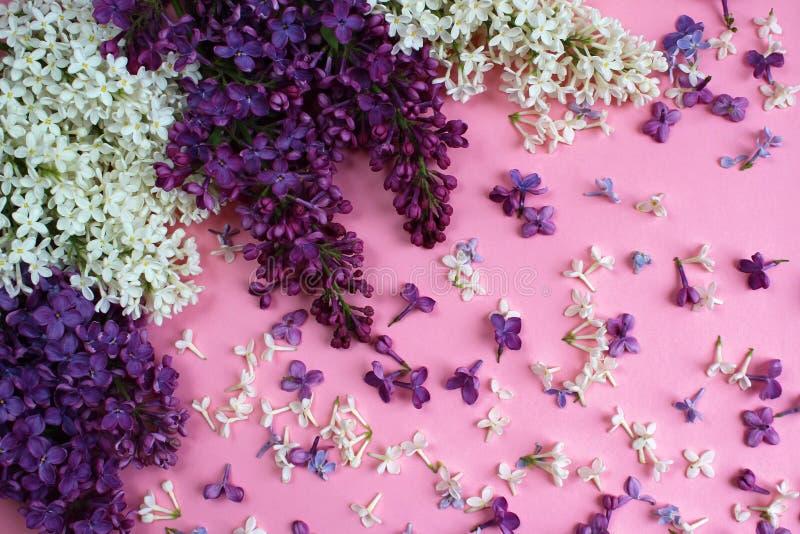 Beschaffenheit von Blumen der Flieder auf einem rosa Hintergrund stockfotos