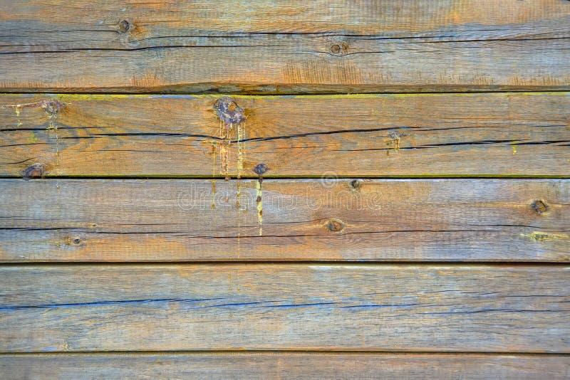 Beschaffenheit von den alten hölzernen Brettern umfasst mit Sprüngen und Tropfenfängern des Harzes Nat?rlicher Hintergrund Hölzer stockfotos