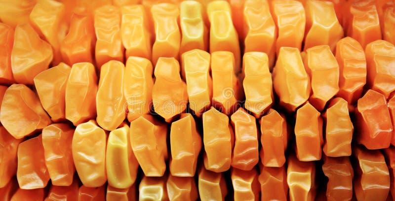 Beschaffenheit von gelben getrockneten Kernen des reifen Maiskolbens stockfoto