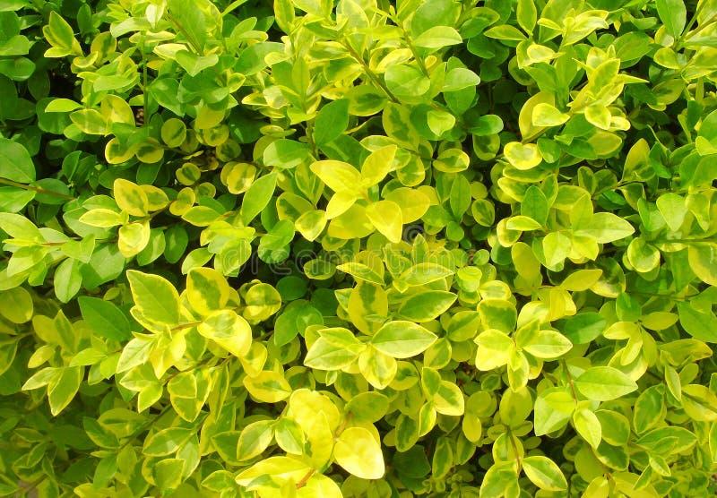 Beschaffenheit von tropischen Bl?ttern Bunte Blätter, horizontales Foto, Hintergrund stockfoto