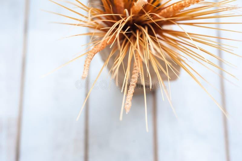 Beschaffenheit von Weizenähren mit einer Niederlassung von Baumwolle in einem Vase gegen einen Baum lizenzfreie stockbilder