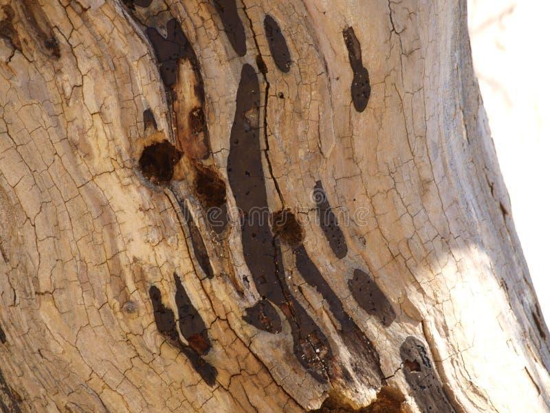 Beschaffenheiten der Platanen-Baumrinde lizenzfreies stockbild