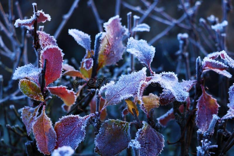 Beschaffenheitshintergrund, Muster Frost auf den Zweigen des Grases eine Ablagerung von den kleinen weißen Eiskristallen gebildet lizenzfreie stockbilder