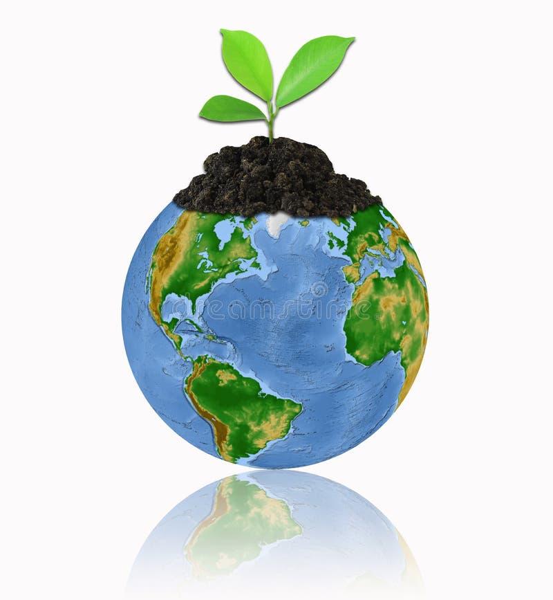 Bescherm het milieu met een geïsoleerdej boom ove stock foto's
