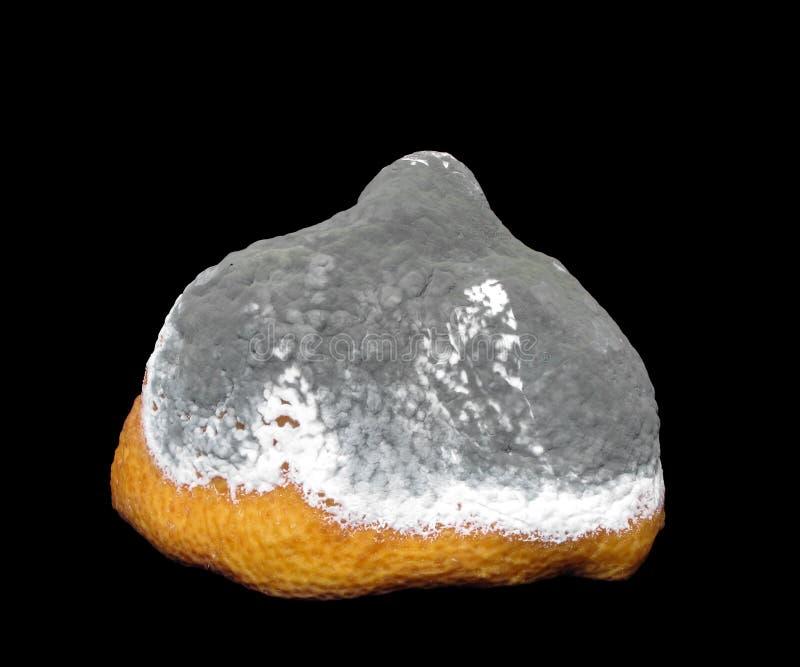 Beschimmelde citroen royalty-vrije stock afbeeldingen