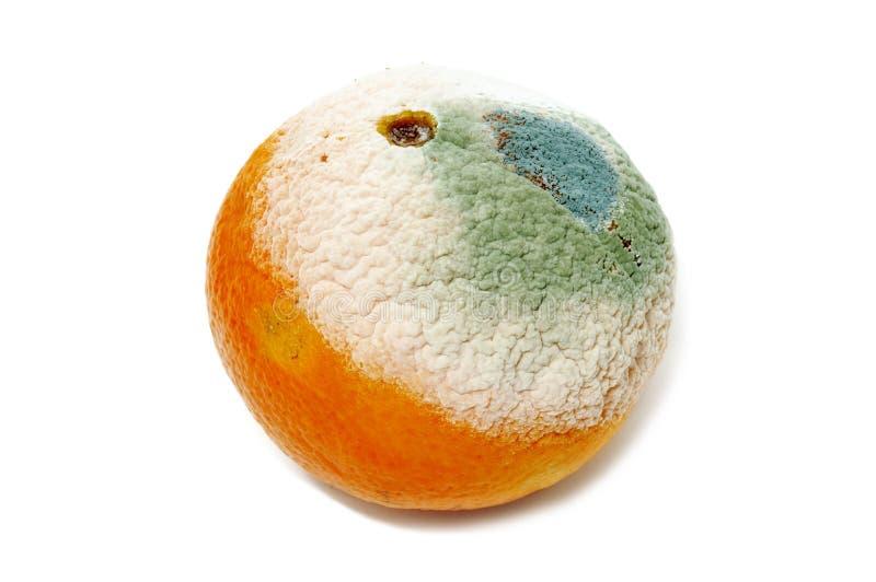 Beschimmelde sinaasappel stock foto's
