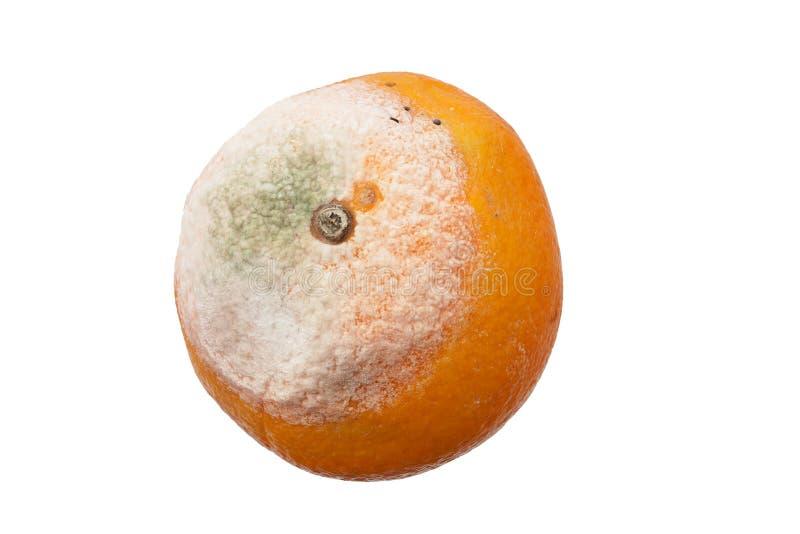 Beschimmelde Sinaasappel royalty-vrije stock foto