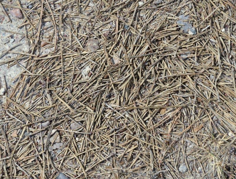 Beschmutzen Sie Beschaffenheit, den braunen Grundboden, der mit kleinen Felsen gemischt wird stockfotografie