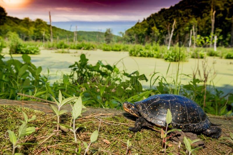 Beschmutzte Schildkröte lizenzfreie stockfotografie