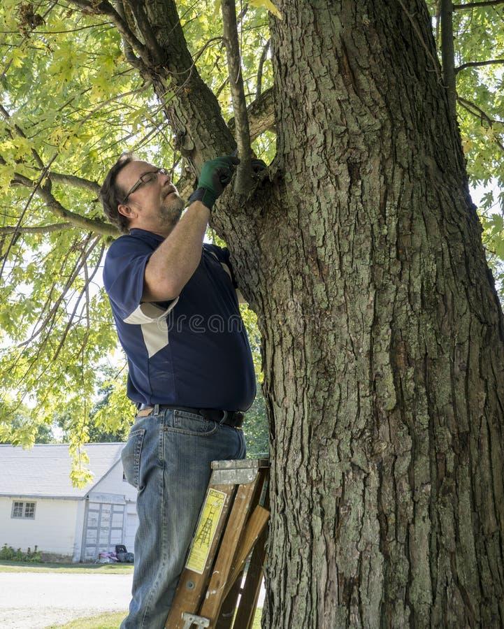 Beschneidung ein niedriger hängender Baumast lizenzfreies stockbild