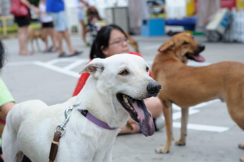 Beschutte Honden stock afbeeldingen