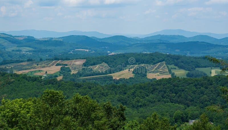 Beskåda en julgranlantgård och en blåa Ridge Mountains arkivbilder