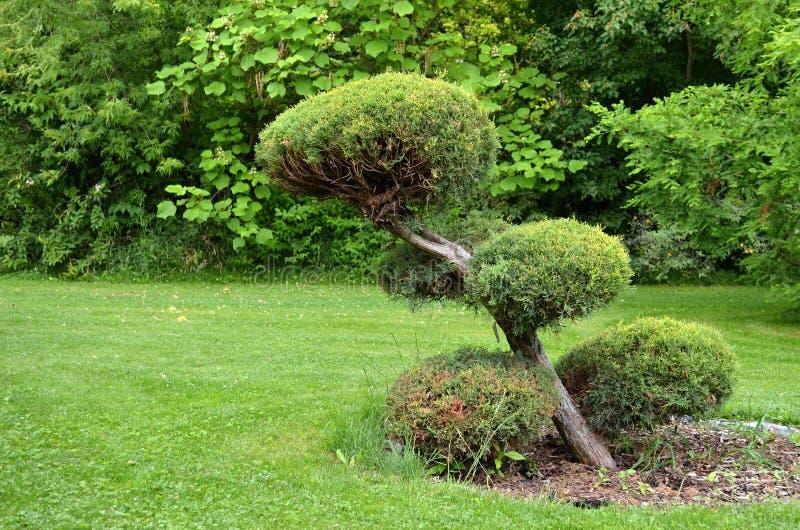Beskåda trädgården royaltyfri fotografi