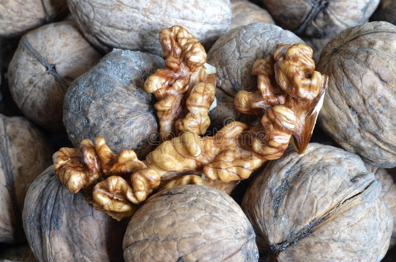 besköt valnötter arkivbild