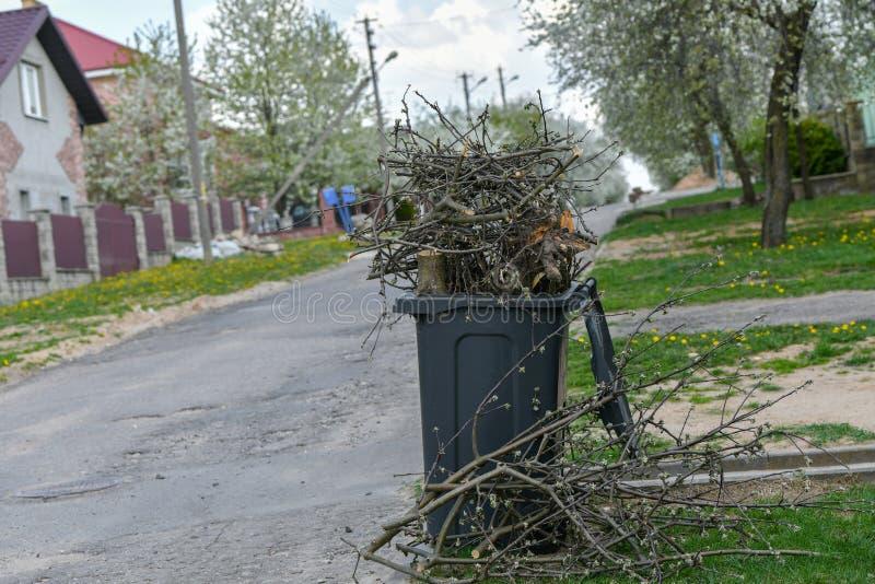 Besk?ra tr?d klippa några filialer från trädet till den organiska kompostbehållaren royaltyfria foton