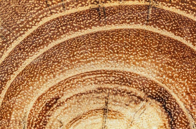 Beskattade akacia och trädcirklar royaltyfria foton