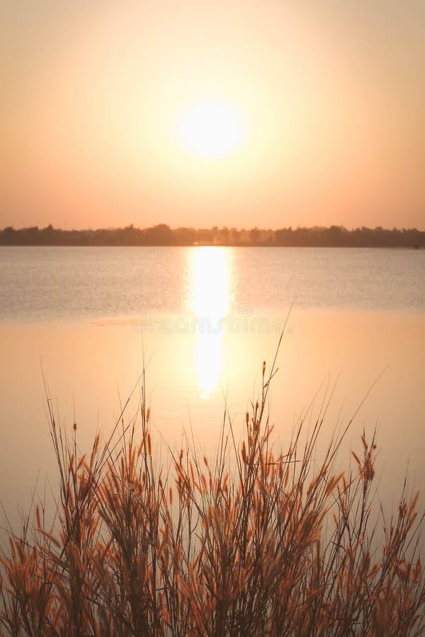 Beskickninggräs eller fjäderpennisetum och solnedgång, tappningbakgrunder royaltyfri foto