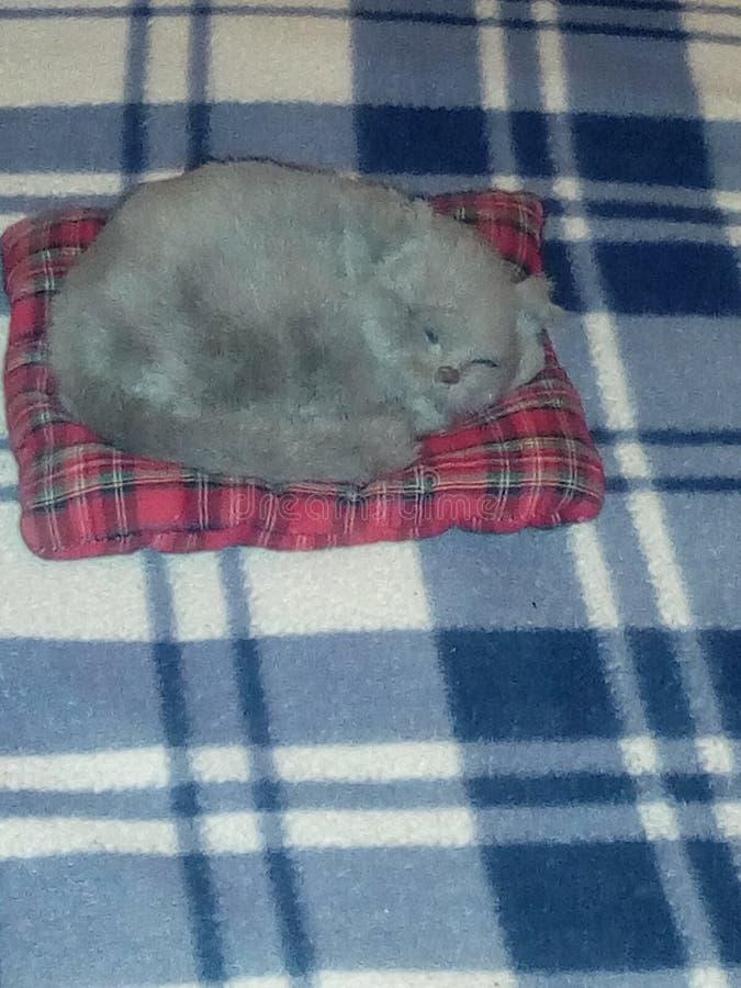 Besnoeiing cate royalty-vrije stock foto