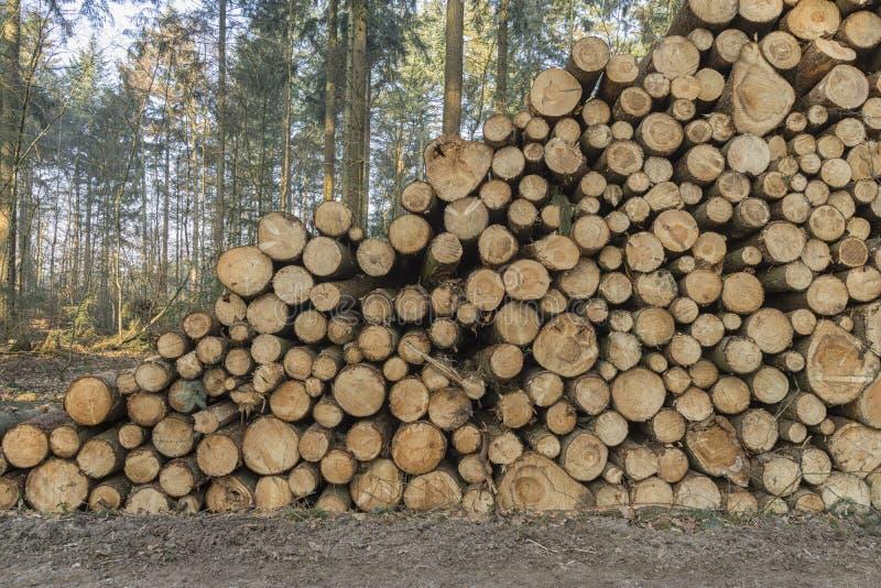 Besnoeiing en gestapeld pijnboomhout in groen bos stock foto