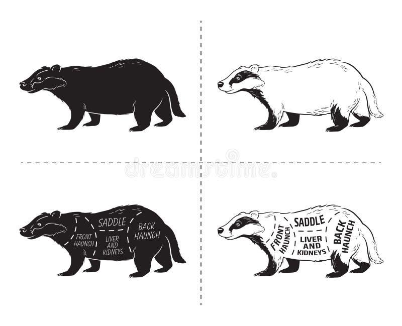 Besnoeiing van dassenreeks Het diagram van de afficheslager - woestijn-schip Uitstekende typografische hand-drawn stock illustratie