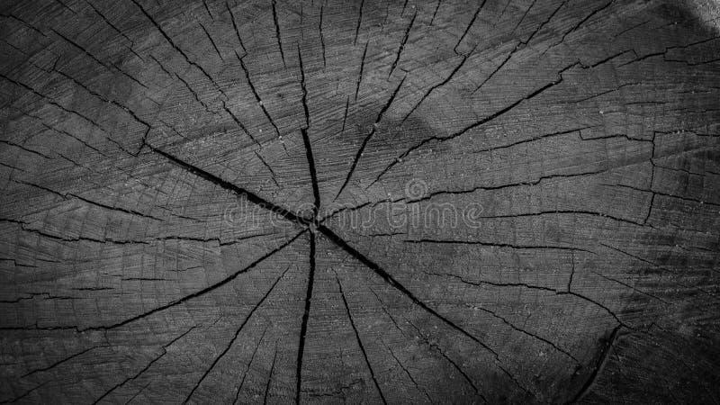 Besnoeiing van een boom, stomp als achtergrond voor kunstenaars stock foto's