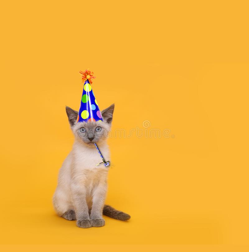 Besnoeiings Siamese Partij Cat Wearing Birthday Hat royalty-vrije stock afbeelding