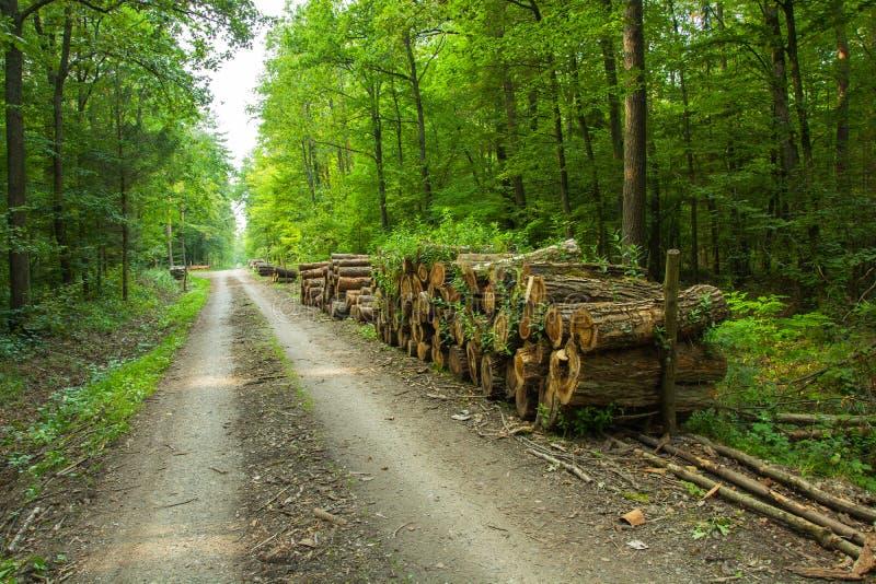 Besnoeiingslogboeken die van hout in het bos liggen stock afbeelding