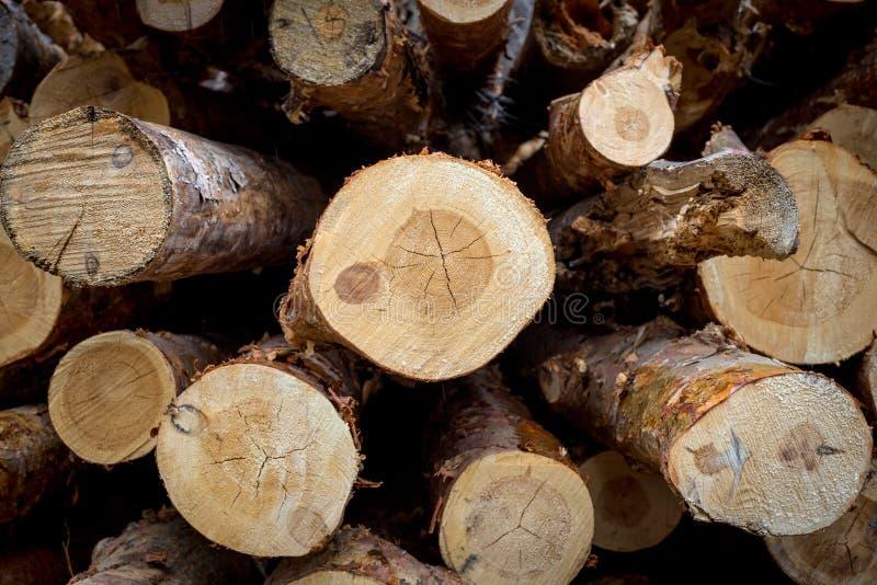 Besnoeiingspijnboom registreren Jaarringen op de besnoeiingspijnboom royalty-vrije stock foto