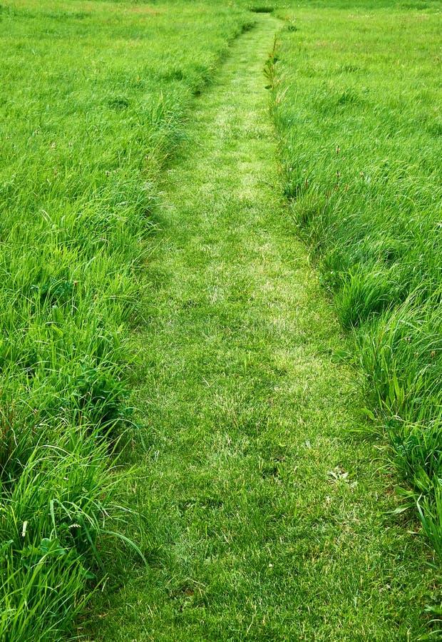 Besnoeiingsweg in een groen grasgazon royalty-vrije stock afbeeldingen