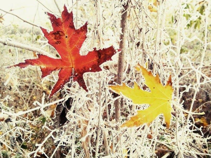 Beso del invierno en otoño imagen de archivo libre de regalías
