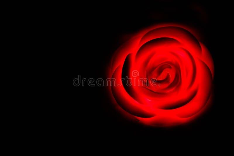 Besonders vorbereitete Rose für Valentinstag stockfotos