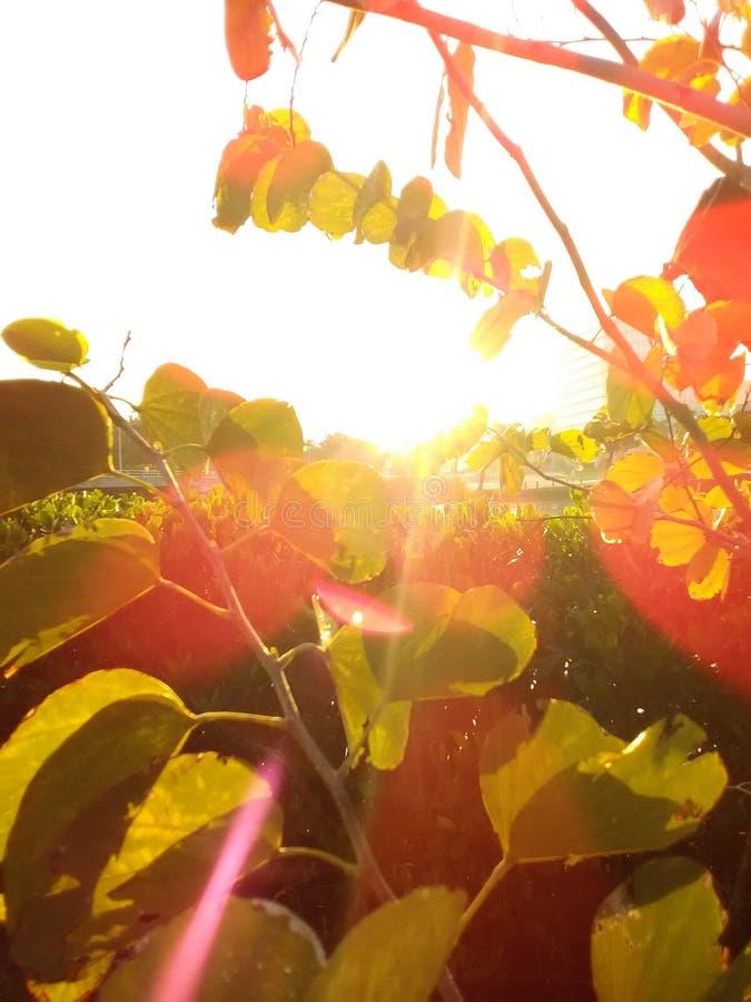 Besos de la sol imágenes de archivo libres de regalías