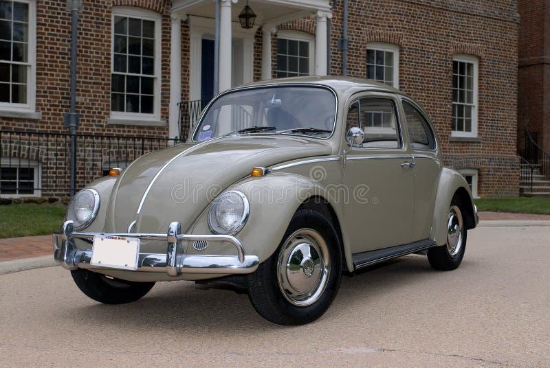 Besouro 1966 de Volkswagen imagem de stock royalty free