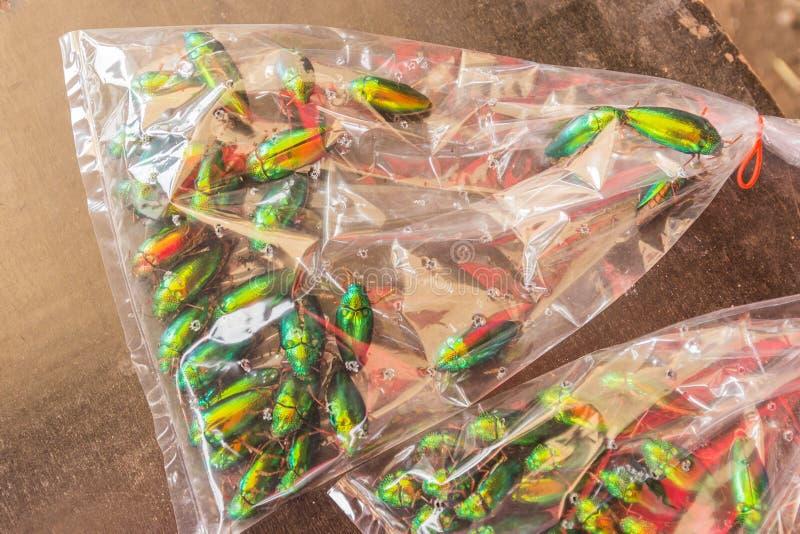 Besouro da joia ou Madeira-perfuração metálica & x28; Buprestid& x29; no saco plástico imagens de stock royalty free