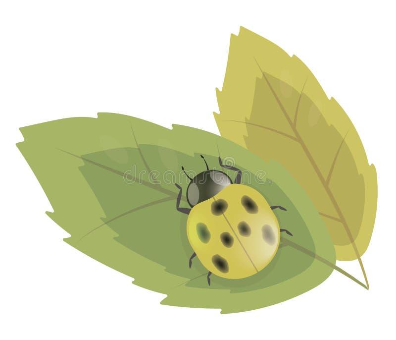 Besouro simples amarelo do joaninha com as salpicaduras pretas em um vetor verde da ilustração da folha isoladas no fundo branco ilustração royalty free