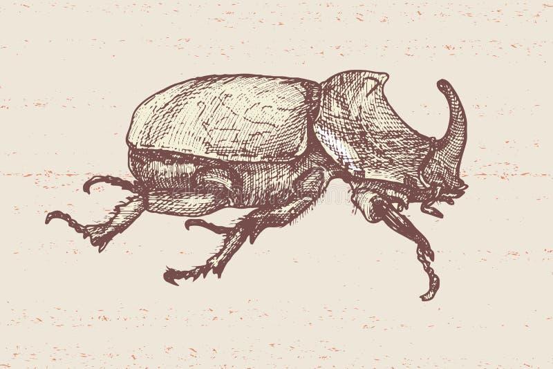 Besouro tirado mão ilustração do vetor