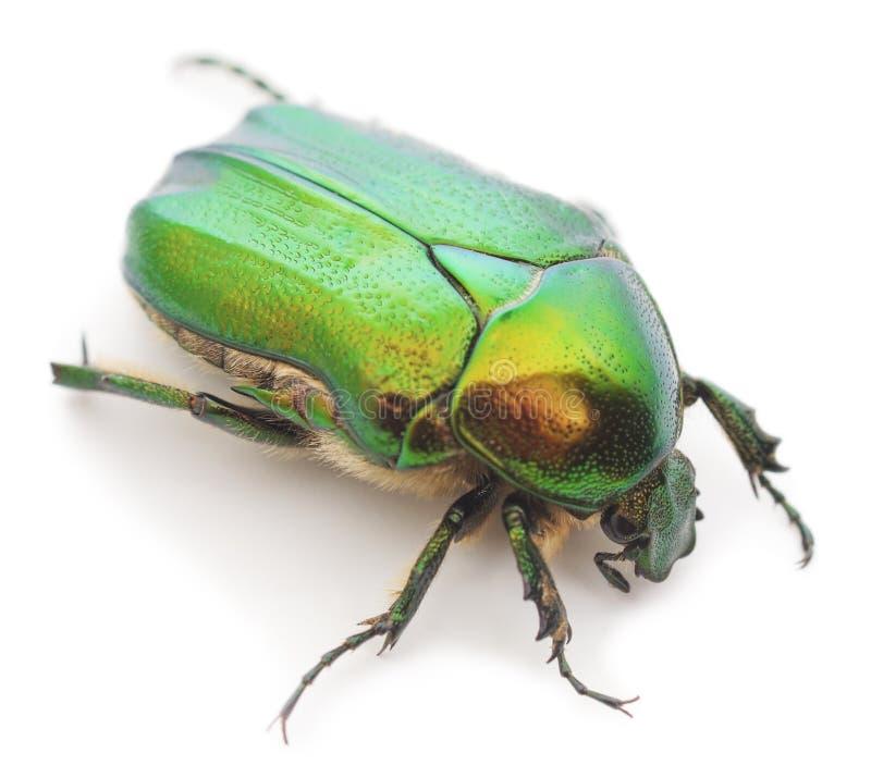 Besouro verde fotos de stock