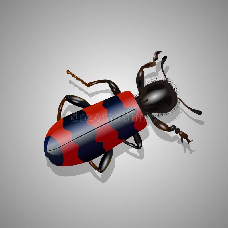 Besouro vermelho e preto real?stico ilustração royalty free